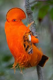 Backyard Birds Utah Birding In Venezuela Angel Falls And Laguna Canaima Rock Bird