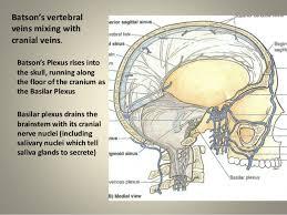Floor Of The Cranium Anatomy Of Alchemy