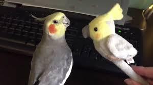 Meme Bird - dank birds meme compilation 5 youtube