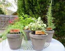 Table Top Herb Garden 156 Best How Does Your Garden Grow Images On Pinterest