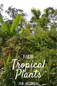 australian native plants brisbane tropical plants and tropical gardens for dry climates lush