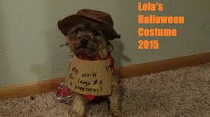 yorkie lola u0027s halloween costume 2015 youtube