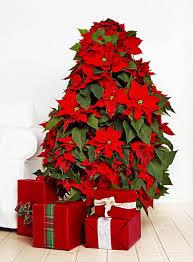 Christmas Flowers Christmas Flowers U2013 Poinsettias U2013 Happy Holidays
