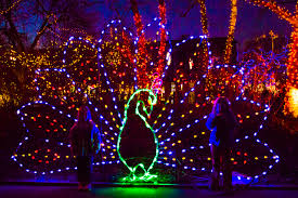 christmas lights at the zoo indianapolis craft knife winter at the indianapolis zoo