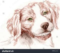 colored pencil sketch britney spaniel puppy stock illustration