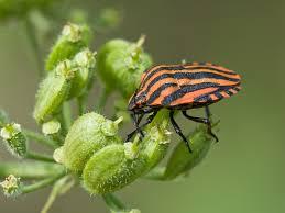 was ist das für ein insekt eine wanze oder was urlaub insekten wanzen sind schöne insekten foto bild tiere wildlife insekten
