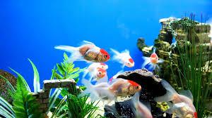 cool home aquarium fish aquarium design ideas