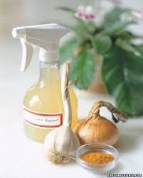 diy aquaponics 5 best organic pest controls for your garden