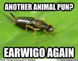 Animal Pun Meme - another animal pun earwigo again surly earwig quickmeme