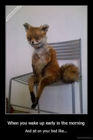 Meme Fox - yelled when you wake up early in the morning and sit on the edge