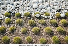 landscape design stock images royalty free images u0026 vectors