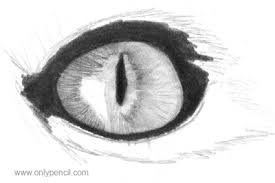 drawing realistic cat eyes onlypencil drawing tutorials