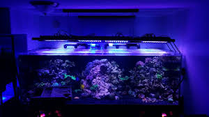sb reef lights review 560g reef build 800g system page 3 reef2reef saltwater and
