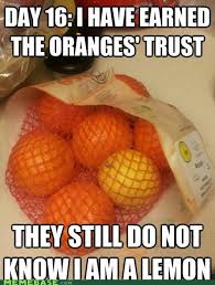 Orange Meme - best of the day x and y suspects nothing meme smosh