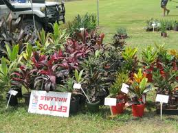 noosa native plants where to buy plants and pots on the sunshine coast sunshine coast