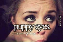 Puppy Eyes Meme - puppy eyes just little things know your meme