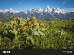 Rugged Mountain Range Beautiful Landscape Scene Yellow Image U0026 Photo Bigstock