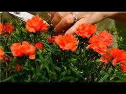 flower garden how to make plants flower better youtube