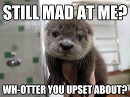 You Still Mad Meme - still mad at me wh otter you upset about misc quickmeme