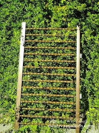 how to build an arbor trellis 15 inspiring diy garden trellis ideas for growing climbing plants