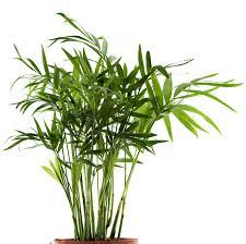 plante d駱olluante chambre 5 plantes dépolluantes tendances faciles d entretien