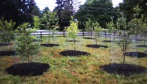 Fruit Tree Orchard And Berry Patch Installation Natural - Backyard orchard design