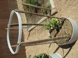 another trellis idea his and hers homesteading