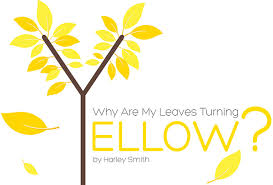 Why Are My Plants Turning by Why Are My Leaves Turning Yellow By Npk Industries