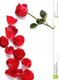 Rose Petals A Rose And Rose Petals Stock Images Image 12601704