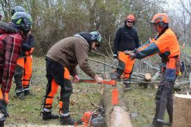 Government Gateway Help Desk Number Gateway Technical College Students Work With Ash Trees In Silver