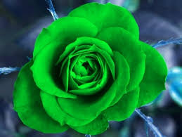 different color roses green blue yellow roses in different colors