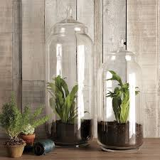 terrariums and other small space and urban gardening ideas the