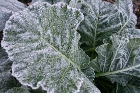 which veggies for which season bonnie plants