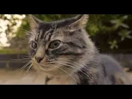 Ugly Cat Meme - squinting cat the good the bad and the ugly youtube