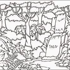 rainforest pictures to print rainforest pictures to colour