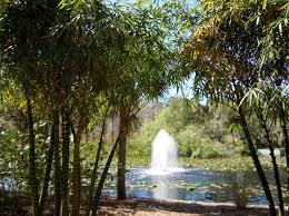 Largo Botanical Garden Pinellas County Florida Botanical Gardens Largo Florida