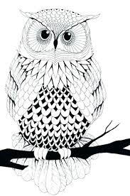 coloring page for adults owl coloring pages of owls for adults owl coloring page coloring pages