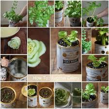 28 best diy grow vegetables indoor images on pinterest creative
