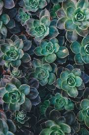succulents meaning the meaning of covenant in unitarian universalism