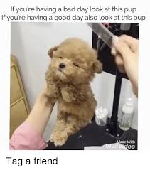 Having A Bad Day Meme - if you re having a bad day look at this pup if you re having a
