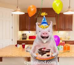 funny happy birthday pig