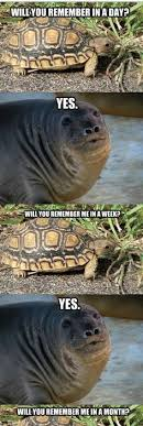 Wrong Hole Turtle Meme - admit it it s hard to argue with this 55 photos funny