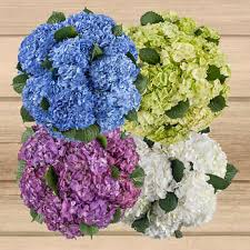 Bulk Hydrangeas Bulk Flowers Costco