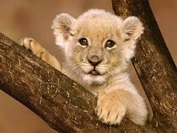 Animales, todas las especies Images?q=tbn:ANd9GcTfJAjVvOCyiVW7QdUfR2AzKx1VE9b0j7IO3tBcqp5vdtYsZheyzg