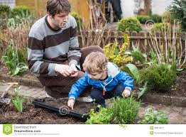 little boy and his father planting seeds in vegetable garden stock