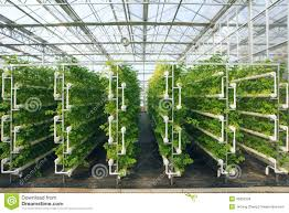 greenhouse stock photo image 45850204