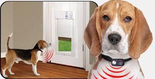 Patio Doors With Built In Pet Door Power Pet Automatic Electronic Dog Cat Doors On Sale Now