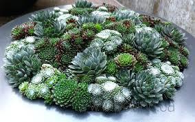 planter for succulents unique planters for succulents succulents of similar shape in a