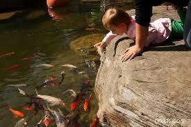a parent u0027s guide to frederik meijer gardens u0026 sculpture park