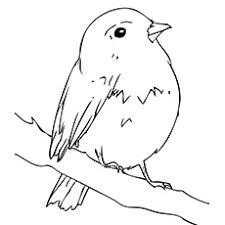 bird coloring pages robin murderthestout
